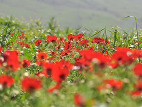 חצבני ליד שדה נחמיה